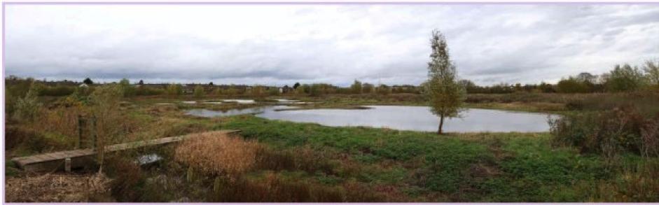Wetlands Winter